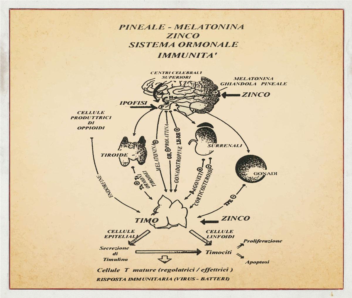 Walter Pierpaoli, pubblicazione su Psychoneuroimmunology, Academic Press, NY 1981