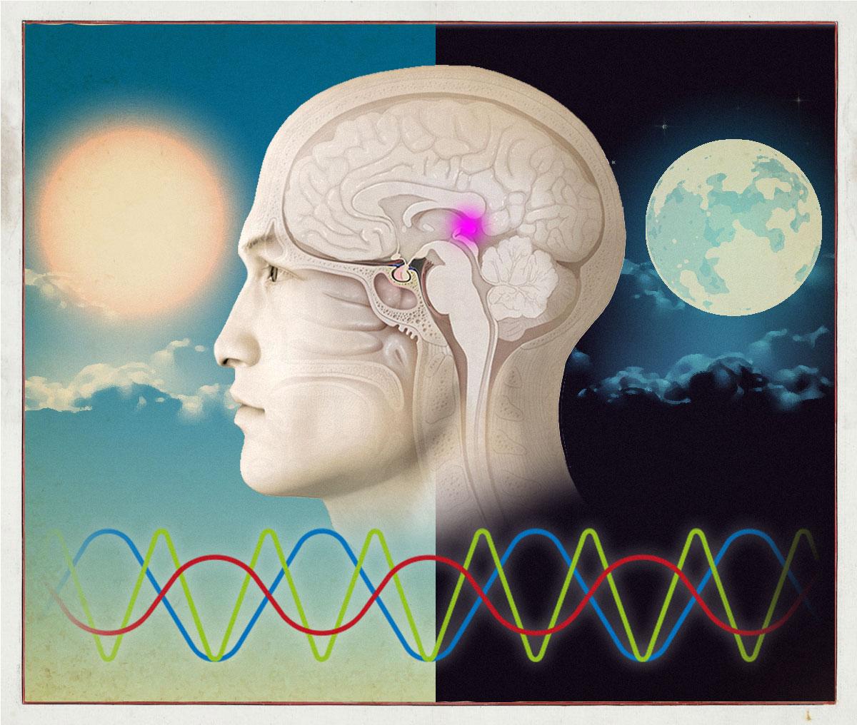 sincronizzazione e salute