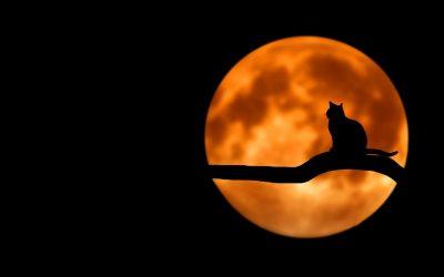 Cade la notte…